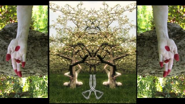 Sampson Blossom still8
